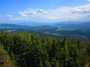 The view from the top of the the watch tower... Widok z wieży widokowej