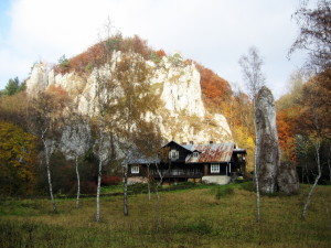 "Betula oycoviensises on the background of villa ""Under the crown""... Brzozy ojcowskie na tle willi ""Pod koroną"""